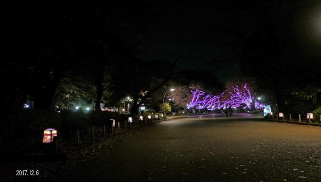 夜の公園667yoru