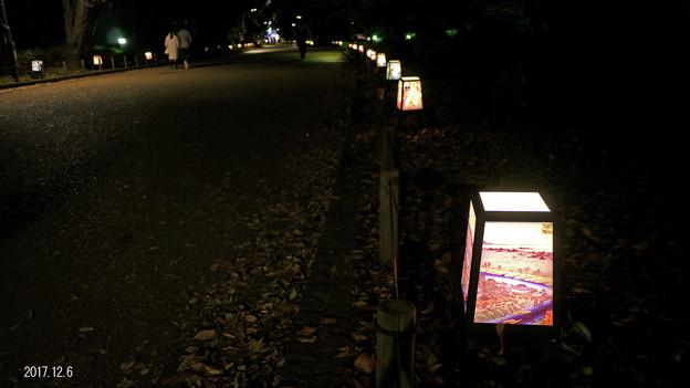写真: 夜の公園_656yoru