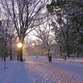 雪の朝0402c
