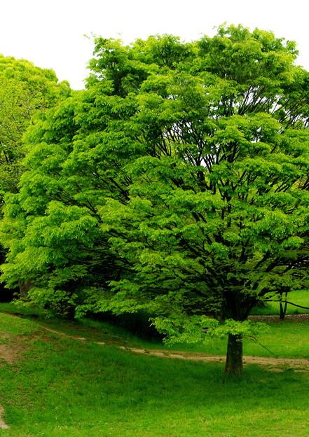 歓喜する樹