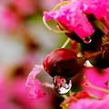 写真: 咲いて散り