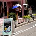 写真: 日傘の列