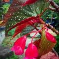 写真: 夏模様の葉っぱ達