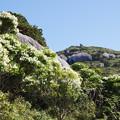 写真: 屋久島の春