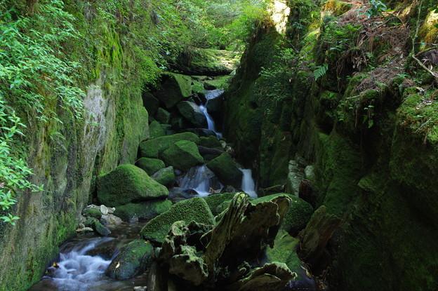 Photos: 苔むす渓谷