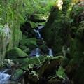 苔むす渓谷