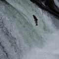 写真: さくらの滝