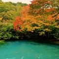 写真: 八甲田・龍神沼・紅葉
