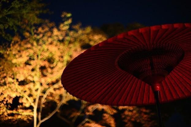紅傘と紅葉ライトアップ