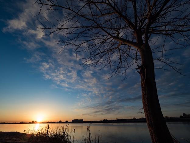 写真: 雲のなる木