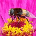 写真: ミツバチ