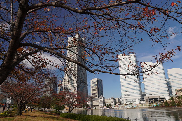 Photos: 横浜みなとみらい