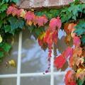 写真: 窓の紅葉