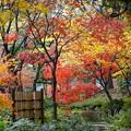 初冬の横浜公園