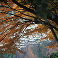 写真: 三ッ池公園