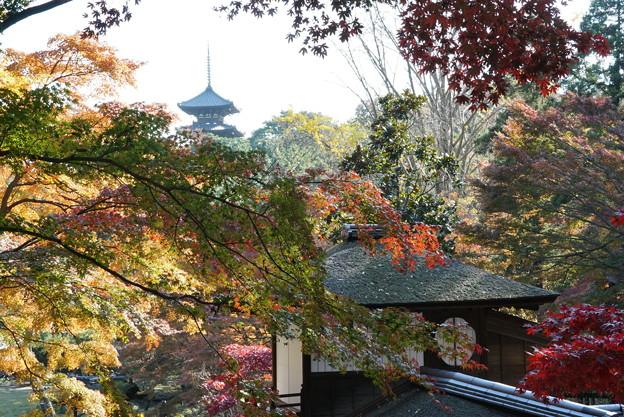 写真: 三渓園内苑