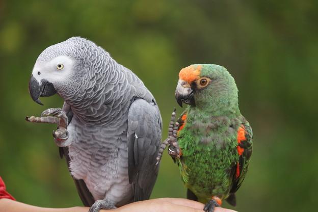 二羽の小鳥