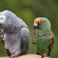 写真: 二羽の小鳥