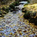 落葉で埋まる小川