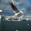 写真: カモメと客船