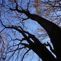 写真: 巨木