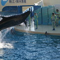 写真: 新江ノ島水族館