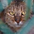 写真: 金網越しの猫