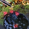 写真: 日本庭園