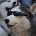 写真: 犬