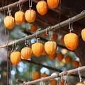 写真: 干し柿