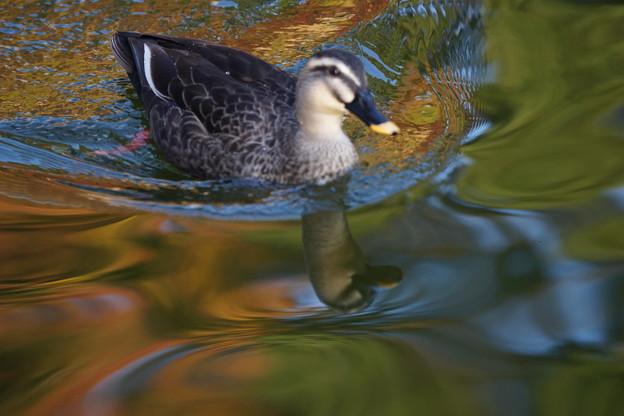 Photos: 初冬の池