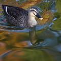 写真: 初冬の池