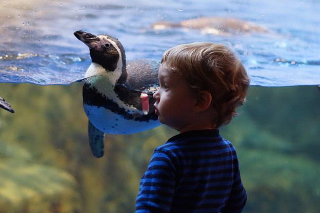 ペンギンと子供