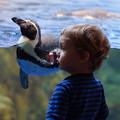 写真: ペンギンと子供