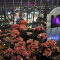 写真: 名古屋塔上的浪漫