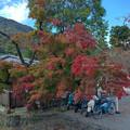 写真: 轉角的那樹 紅了
