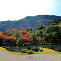 写真: 庭院之美