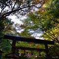 写真: 秋天的?色鳥居