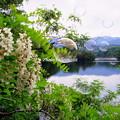 写真: 静かな湖畔の藤の花