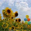 写真: 真夏の1ページ