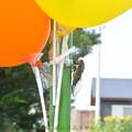 写真: 風船と蝉