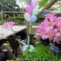 Photos: 1502822991_4