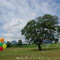 Photos: 1504816697_44
