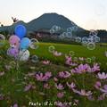 Photos: 1506882334_74