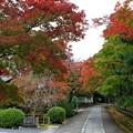 写真: 楓之道