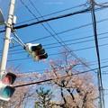 写真: 桜と青空と信号、電線、電柱の街角 ~名所が全てじゃない