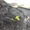 写真: 桜の木の下に小さな命2つ ~new baby 4.4