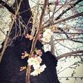 写真: 桜の木の桜に ~happiness 4.4