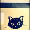 Kuroneko at night. ~新黒猫~8.8 #世界猫の日