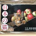 """写真: ねこ写真が生きてる~岩合光昭ワールド全開~""""日本の猫カレンダー""""もう到着オーラに悶絶"""